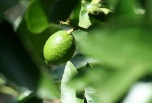 """""""Meringues au citron vert"""" de la maison Lenôtre (recette)"""