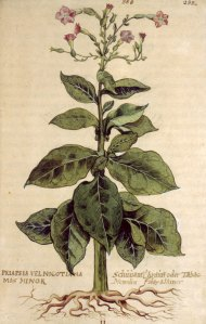 """L'histoire du """"Tabac"""" (1492 à nos jours)"""