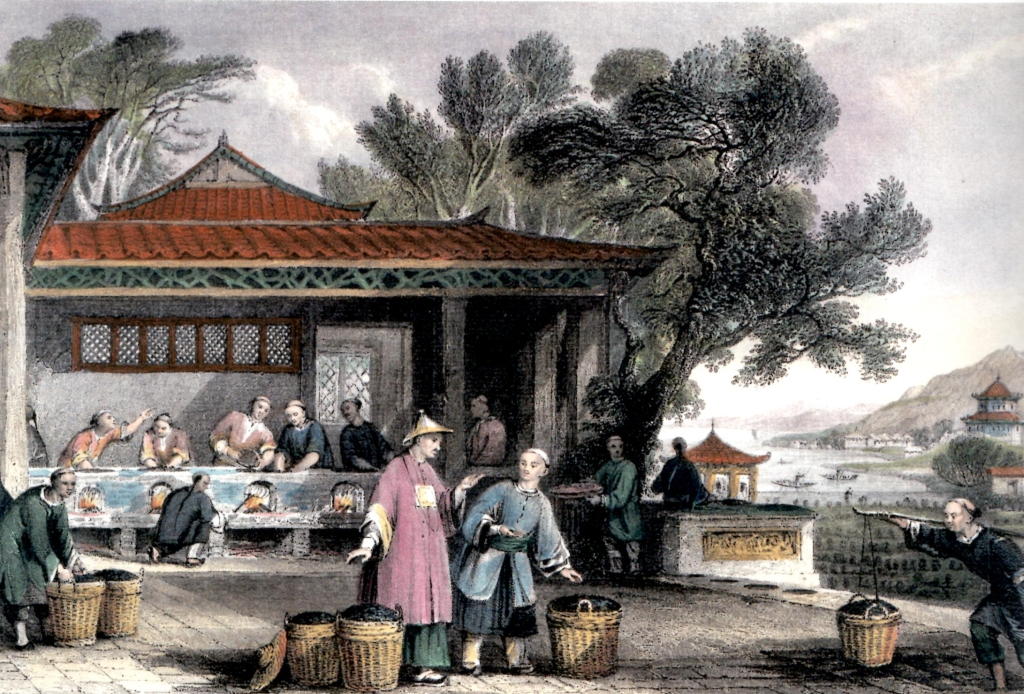 """Culture et préparation du Thé en Chine"" Gravure de Thomas Allom. dans G. Newenham Wright, China in a series of views 1843"